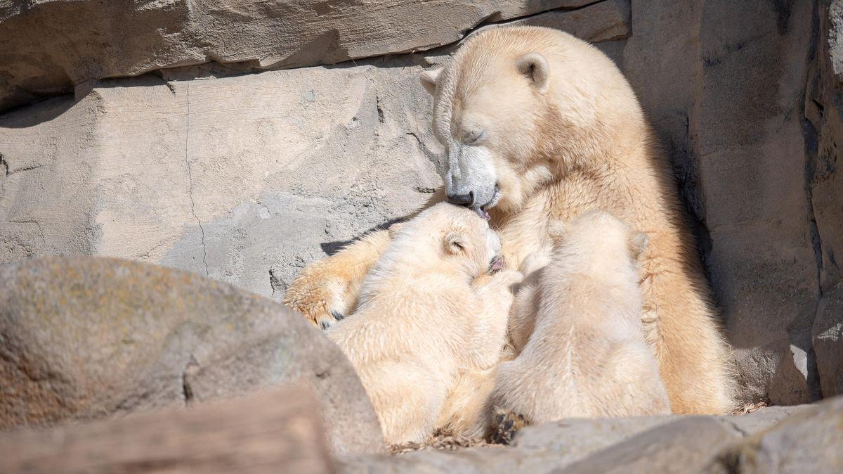 Eisbären Bremerhaven Zoo